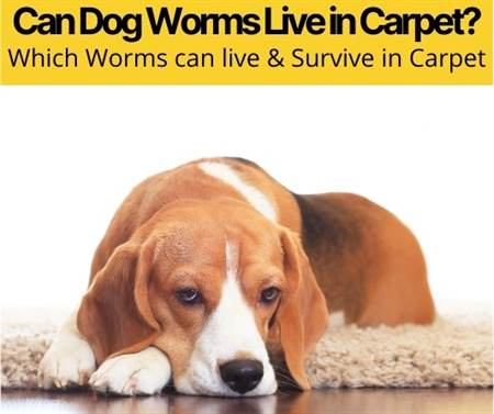 Can Dog Worms Live in Carpet & Can Worm Eggs?