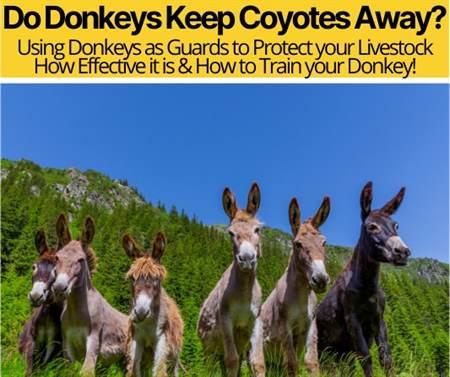 Do Donkeys Keep Coyotes Away -Can Donkey Kill Coyote?