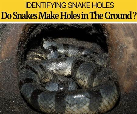 Do Snakes Dig Holes In The Ground -Why & How they Look Like