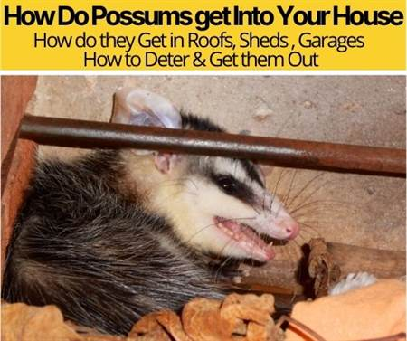 How Do Possums get Into Your House-How to Deter&Get Them Out