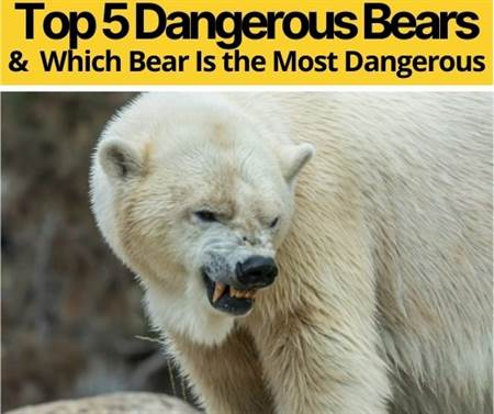 Which Bear Is The Most Dangerous - Top 5 Dangerous Bears