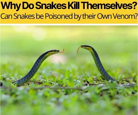 Can Snakes be Poisoned by their Own Venom