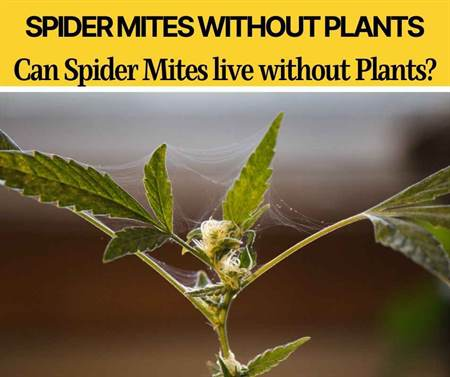 Can Spider Mites Live Without Plants - Can They Survive?