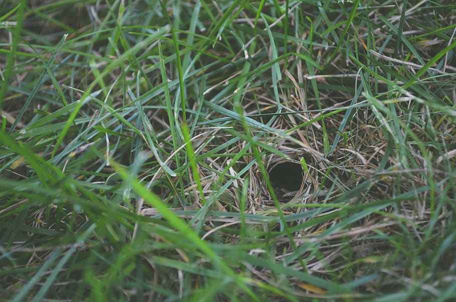 Do Snakes Make Holes In The Ground-How they Dig & Make Holes