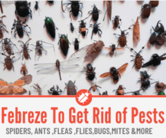 Febreze To Kill Spiders, Ants, Fleas ,Flies & Other Bugs