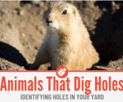 13 Animals That Dig Holes in Yard - Identifying Holes in Yard