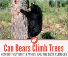 Can Bears Climb Trees - Why Do Bears Climb Trees & How Well