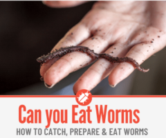 Can you Eat Worms - How To Eat Worms & What Do they Taste Like