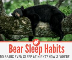 Bear Sleep Habits - Grizzlies, Black, Brown & Polar Bears