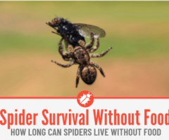 How Long Can Spiders Live Without Food or Water