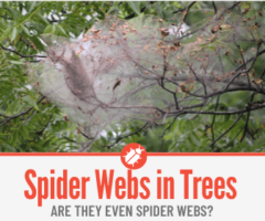 Spider Webs in Trees -What Are they & How to Get Rid of them
