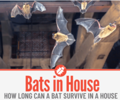 How Long Can a Bat Survive in a House - Signs of Bats in your House