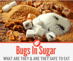 What Are the Bugs In my Sugar & Weevils In Sugar Bags