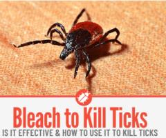 Does Bleach Kill Ticks - In Home & Yard