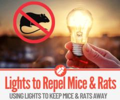 Lights On To Keep Mice & Rats Away!