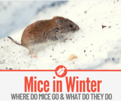 What Do Mice Do in the Winter - Can a Mouse Freeze to Death?