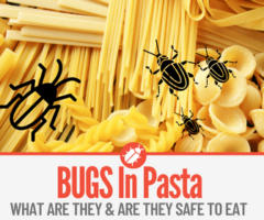 What Are the Bugs In my Pasta - Weevils In Pasta Boxes
