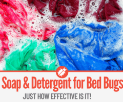 Laundry Soap & Detergent to Kill Bed Bugs -Extremely Effective!