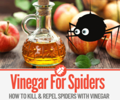 How to Kill and Repel Spiders with Vinegar + DIY Spray Recipe